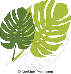 philodendron leaves on white background, vector