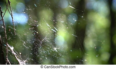 Philodromidae is a family of spiders commonly known as...