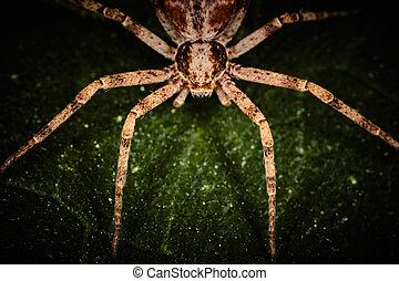 Philodromidae spider extreme macro photo