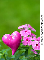 Phlox with a heart on nature background
