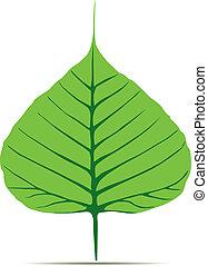 Pho_leaf