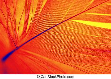 Phoenix feather - Feather of Phoenix, mythical, sacred...