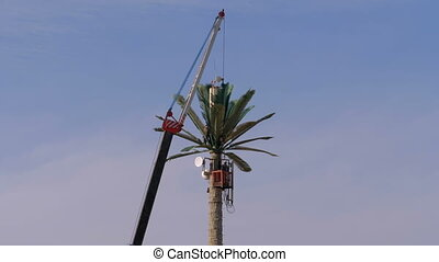 Phone Cell Tower in the Form of Palm Trees against the Sky....