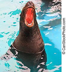 phoque commun, zoo