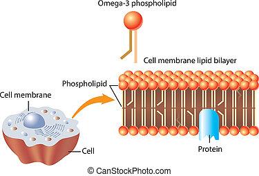 phospholipid, omega-3