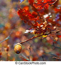 Photo background with acorns on a branch with leaves of oak