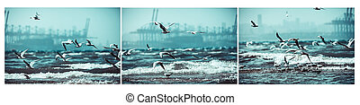 Photo collage of a seagulls