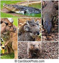 Photo collage of Australian native wildlife