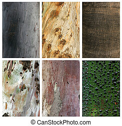 Photo collage of exotic wood trunks and textures