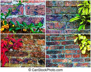 Photo Collage Of Stone Wall Backgrounds With Ivy Leaves