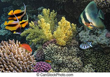 photo, de, a, corail, colonie