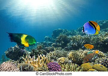 photo, de, a, corail, colonie, sur, a, récif, sommet