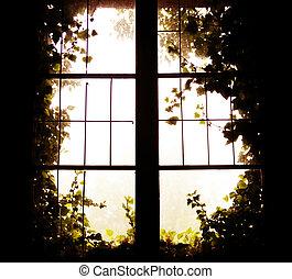 photo, fenêtre, nature