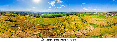 Photo from drone, rice harvesting by local farmers