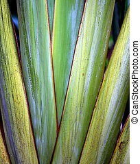 photo green palm leaves - Photo a unusual bright green palm...