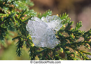 cold ice on the juniper