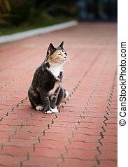 Photo of a beautiful tortoiseshell cat portrait lies