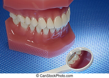 Dentistry - Photo of a Dental Model and Dental Mirror - ...