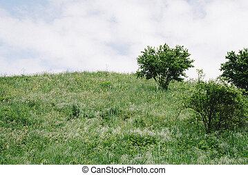 photo of a green mountain near la spezia