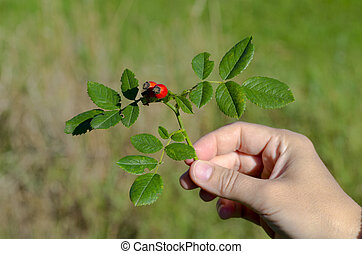 Photo of a hand holding a rosehip in the wild on a sunny autumn