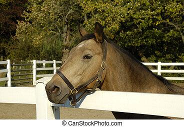 Photo of a Horse - Horse Ranch