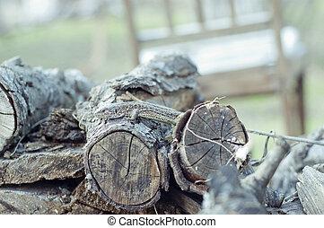 lizard - Photo of a lizard lying on the logs. Reptiles...