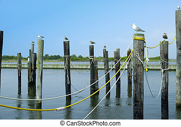 Pier - Photo of a Pier