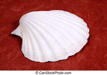Shell - Photo of a Sea Shell