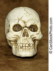 Skull - Photo of a Skull