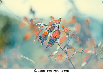 Photo of autumn leaves on blurred background