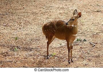 beautiful deer in the