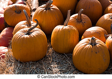 Photo of beautiful pumpkins at outdoor farmer local market in sunny autumn day