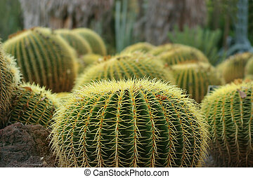 Photo of Cactuses