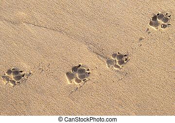 Photo of dog footprint on the tropical beach