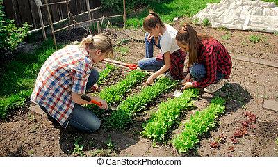 Photo of family planting lettuce at backyard garden
