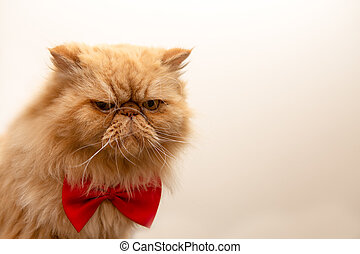 Photo of fluffy ginger cat in red bow tie sitting