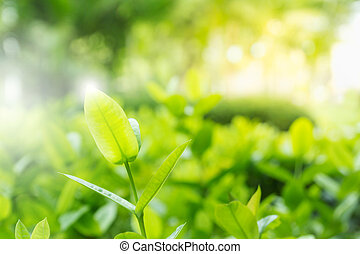 Photo of fresh and green leaves on blur green background
