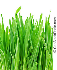green grass - photo of fresh colorful green grass against...