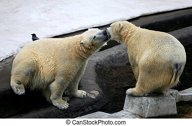 Photo of funny playing bears