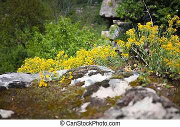 photo of grass and flowers on high cliff