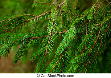 photo of green fur tree branches on other branches background