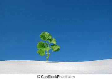 plant growing in snow