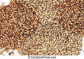 photo of malt grains