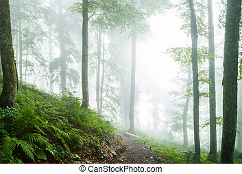 Photo of misty forest with trees, plants, fern