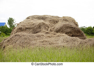 Photo of rolls of hay in the field