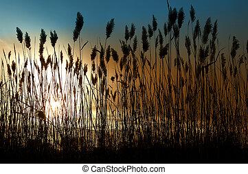 Photo of Sea Grass With Sun Setting