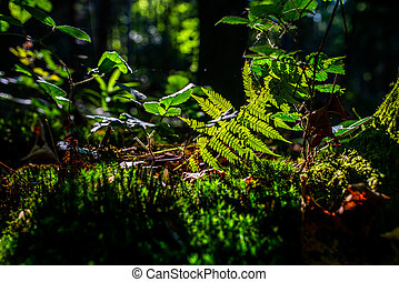 photo of sun rays shining through the fern leaves in the forest