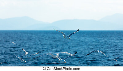 photo of the gulls in Greece