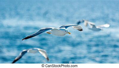 photo of the gulls