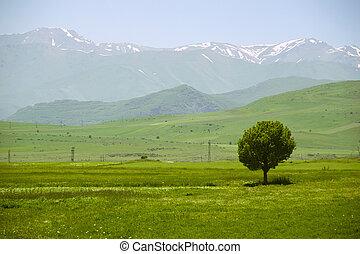 Idyllic landscape with single tree and mountains on background